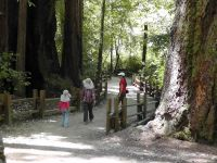 Парк Big Basin Redwood State Park
